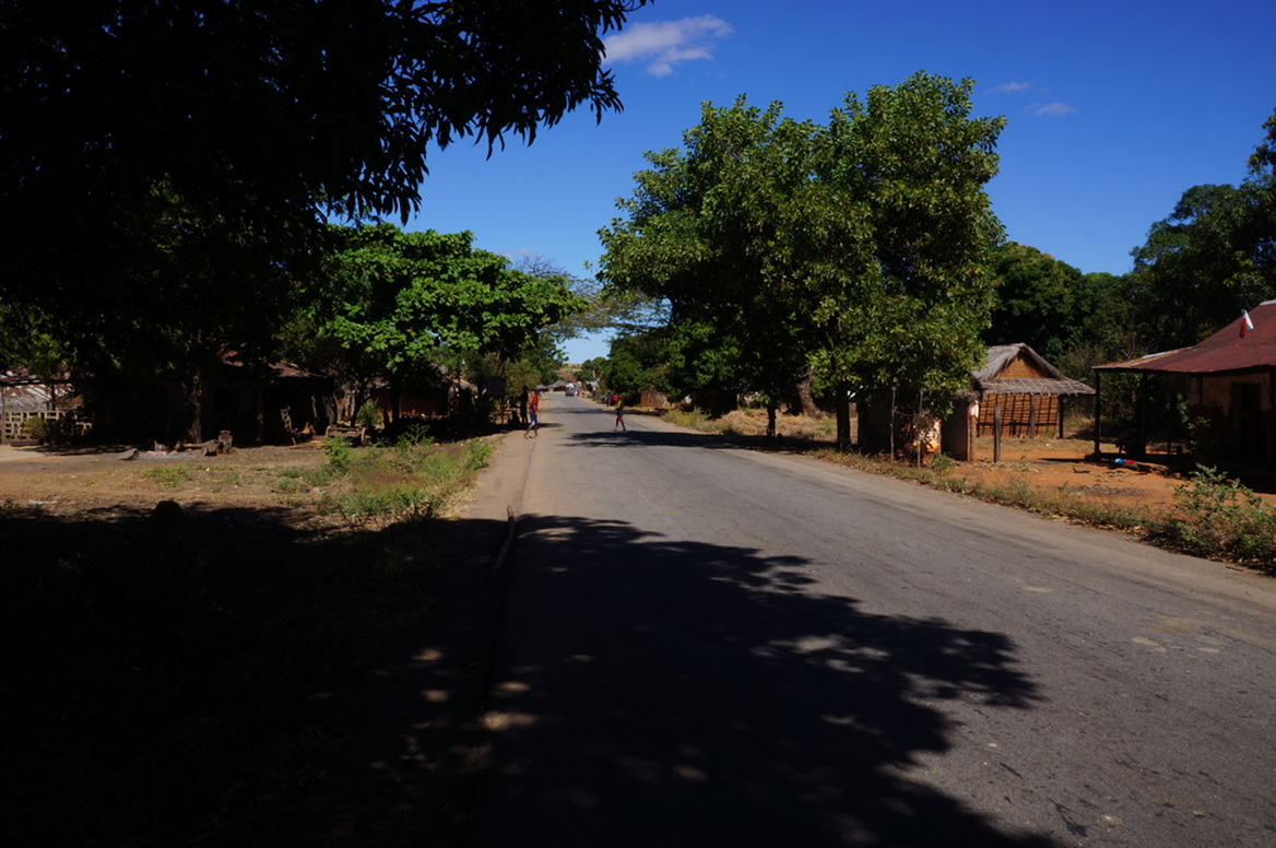 Village trees, road to Mahajanga
