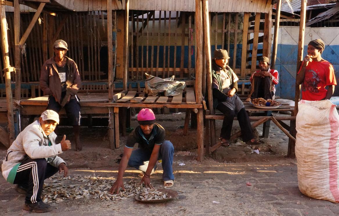 Madagascar work - fish sorting