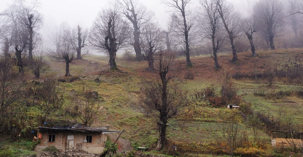 House with Tree, road to Dilijan