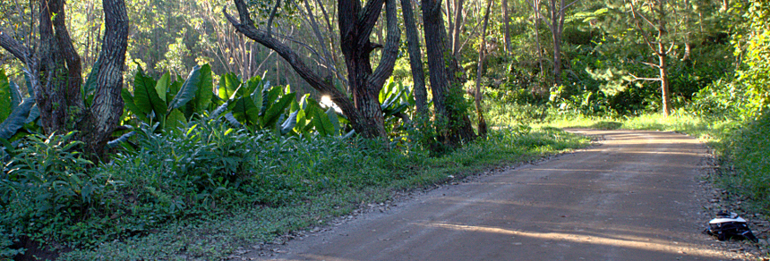 Madagascar forest - Pack on road