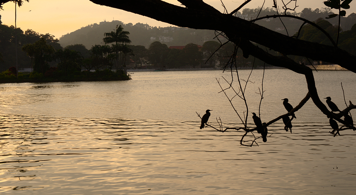 Kandy - Lake with Birds