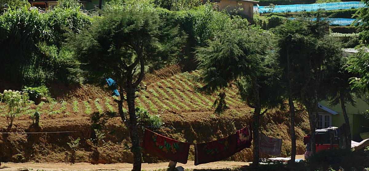 Shantipura - market gardens