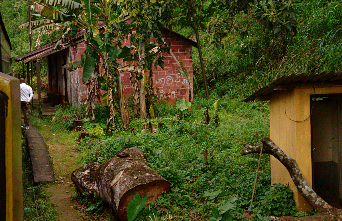 Sri Lanka: Overgrown jungle railway station