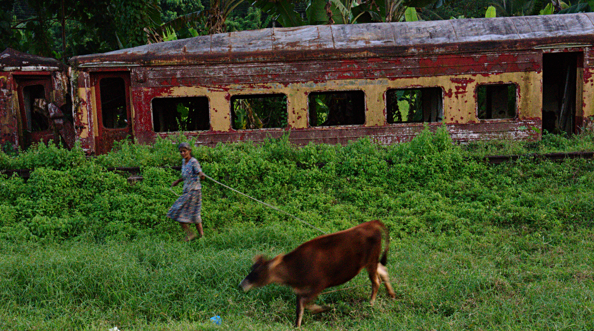 Sri Lanka: Woman Running with Cow Near Train