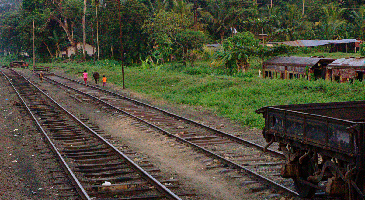 Sri Lanka: Kids and Cow on Train Tracks