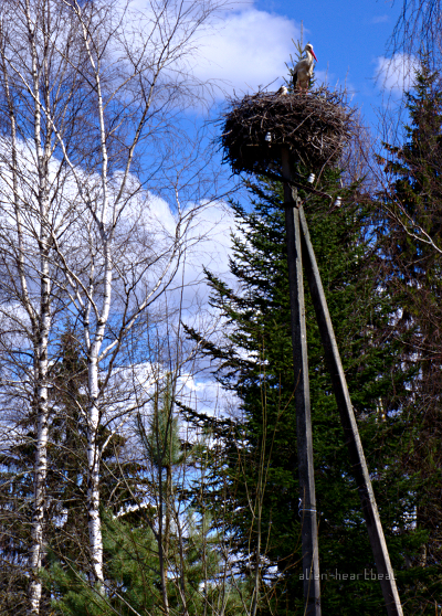 Estonia, Road to Turi - Stork Nesting