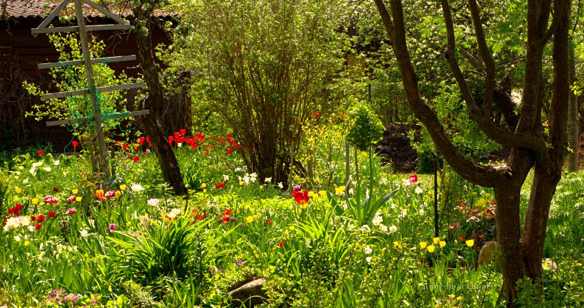 Estonia - Otepää - Monet's Garden