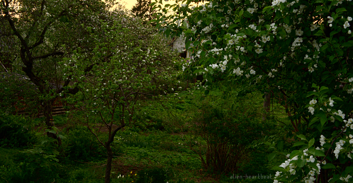 Estonia - Otepää - Evening Garden with white flowers