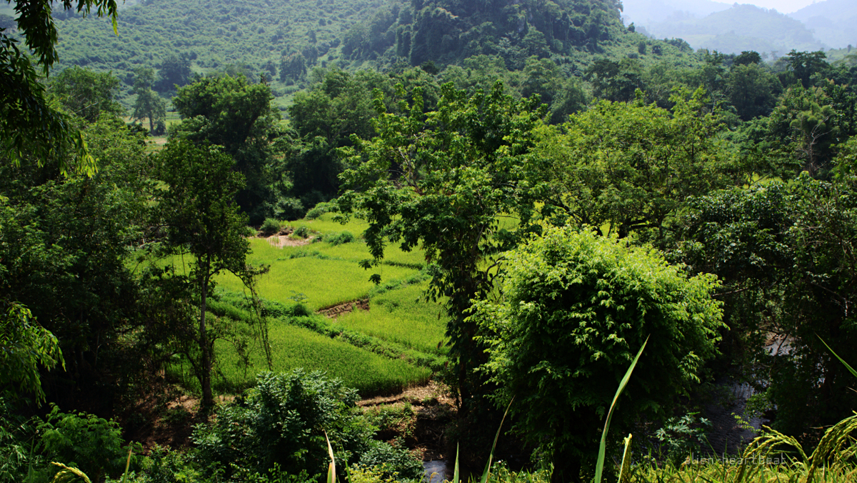 Laos: mountains- stream and fields