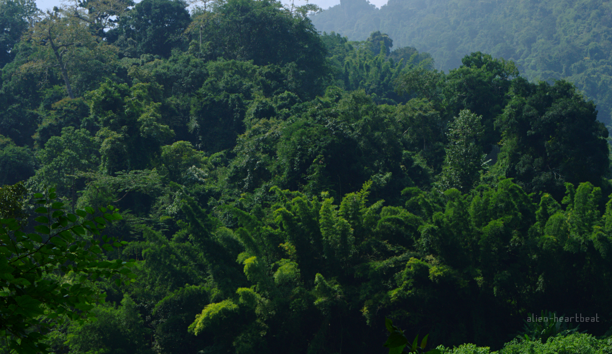 Laos-Mountains-dense_forest